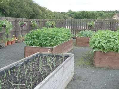 Bedlington Allotment